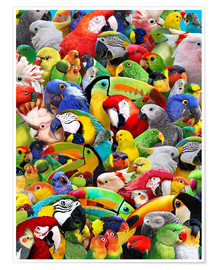 Poster  Parrot Heads - Lewis T. Johnson