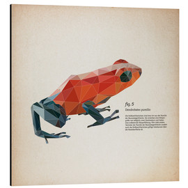 Tableau en aluminium  Grenouille polygonale, carré (latin) - Labelizer