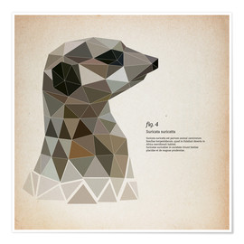 Poster  Suricate polygonal, carré (latin) - Labelizer