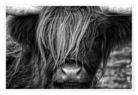 Poster  Vache highland en Écosse - Martina Cross