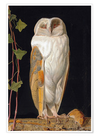 Poster  The White Owl - William James Webbe