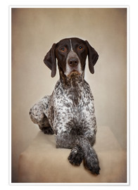 Poster German shorthaired pointer / 1