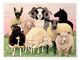 Poster  several sheeps - Pat Scott