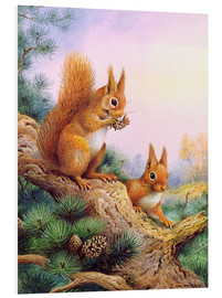 Tableau en PVC  Pair of Red Squirrels on a Scottish Pine - Carl Donner