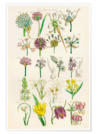 Poster  Fleurs sauvages - Sowerby Collection