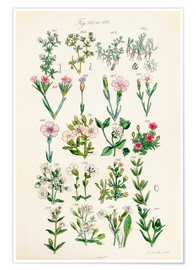 Poster  Fleurs sauvages Fig. 161-180 - Sowerby Collection