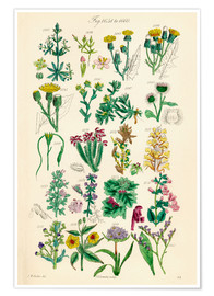 Poster  Fleurs sauvages Fig. 1641-1660 - Sowerby Collection