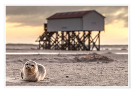 Poster  Robbe in St Peter Ording - Daniel Rosch