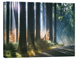 Tableau sur toile  Morning Light in the Forrest - Martina Cross