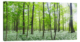 Tableau sur toile  A forest in springtime with wild garlic - Benjamin Butschell