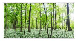 Poster  A forest in springtime with wild garlic - Benjamin Butschell