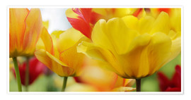 Poster Spring Tulips