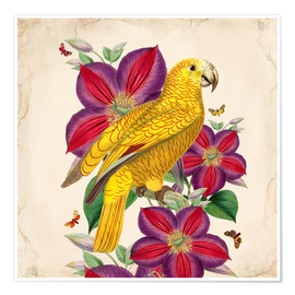 Poster  Oh My Parrot V - Mandy Reinmuth