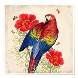 Poster  Oh My Parrot III - Mandy Reinmuth
