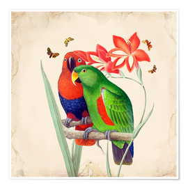 Poster  Oh mon perroquet I - Mandy Reinmuth