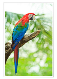 Poster  Perroquet tropical