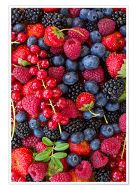 Poster  Fruits rouges
