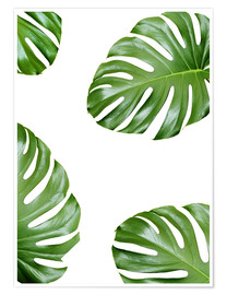 Poster  Feuilles de monstera - Finlay and Noa