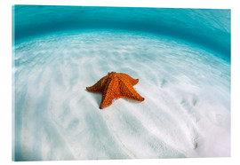 Tableau en verre acrylique  A West Indian starfish on the seafloor in Turneffe Atoll, Belize. - Ethan Daniels