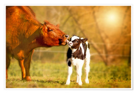 Poster Cow and calf in the pasture