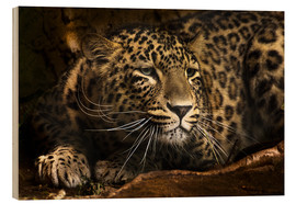 Tableau en bois  Leopard on the lookout - Edith Albuschat