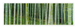 Poster  Green bamboo forest in Kyoto, Japan - Jan Christopher Becke