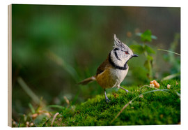 Tableau en bois  Cute tit standing on the forest ground - Peter Wey