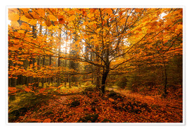 Poster Gold leaf - autumn forest
