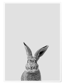 Poster  Suivez le lapin - Finlay and Noa