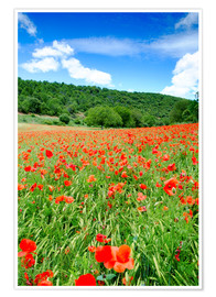Poster Poppy fields near Covarrubias, Castile and Leon, Spain, Europe