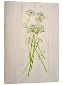 Tableau en bois  Allium ursinum, medicinal herb - Axel Killian