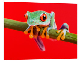 Tableau en PVC  Rotaugenlaubfrosch to red