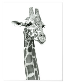 Poster  Étude d'une girafe souriante - Ashley Verkamp