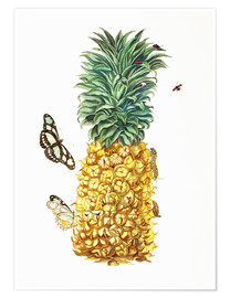 Poster  Ananas et insectes - Maria Sibylla Merian