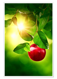Poster Red apple