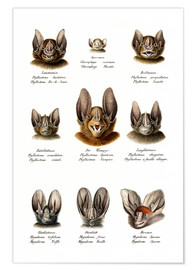 Poster  Different Kinds Of Bats - Karl Joseph Brodtmann