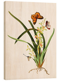 Tableau en bois  Butterflies and a dragonfly on a plant