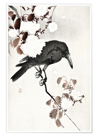 Poster  Crow and Cherry Blossoms - Ohara Koson