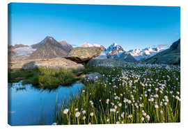 Tableau sur toile  Blooming of cotton grass at feet of Piz Bernina, Switzerland - Roberto Sysa Moiola