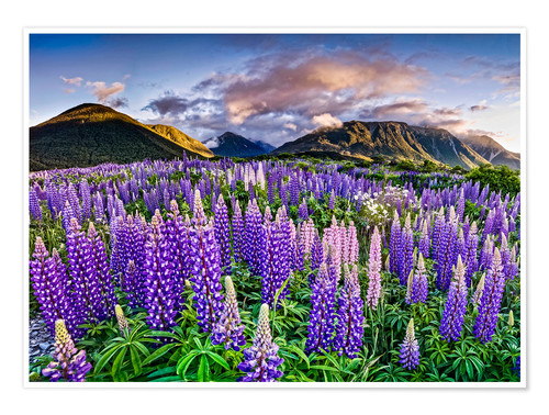 Poster Lupines at Arthur's Pas