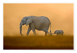 Poster  African Elephants mother with baby, Masai Mara - FLPA