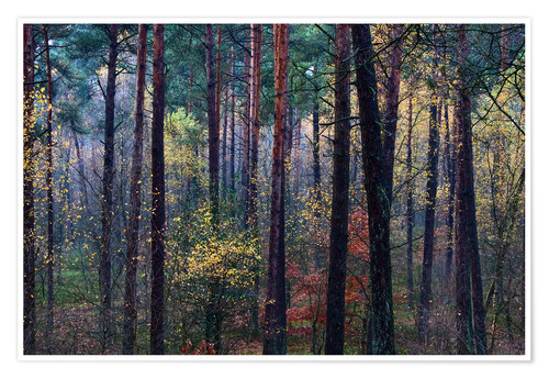 Poster Colorful autumn forest