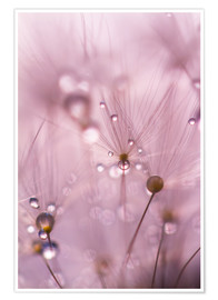 Poster Dewdrops on a dandelion seed