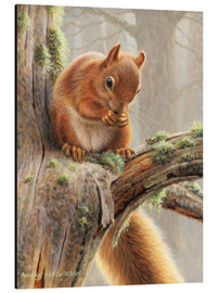 Tableau en aluminium  Red squirrel sitting on tree in forest