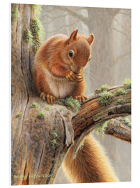 Tableau en PVC  Red squirrel sitting on tree in forest