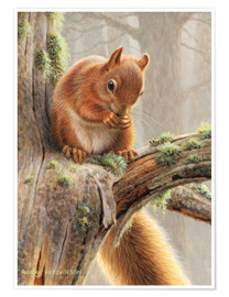 Poster  Red squirrel sitting on tree in forest