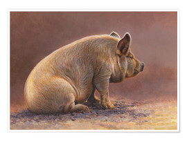 Poster  Pig sitting in pen