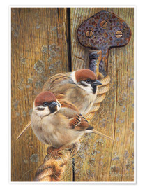 Poster Two sparrows perching on rope by wooden door
