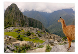 Tableau en PVC  Lama regardant le Machu Picchu - Don Mammoser