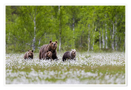 Poster Famille d'ours